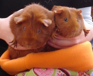 On Chally';s black-clad lap, Pepper and Cardamom are in a pouch with a food pattern on the outside, and orange fleece lining which is folded over at the top. Chally is supporting both around their middles with her hands, and their paws are sticking out. They are both looking at the camera.